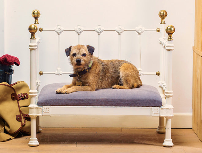Cornish Beds for dogs