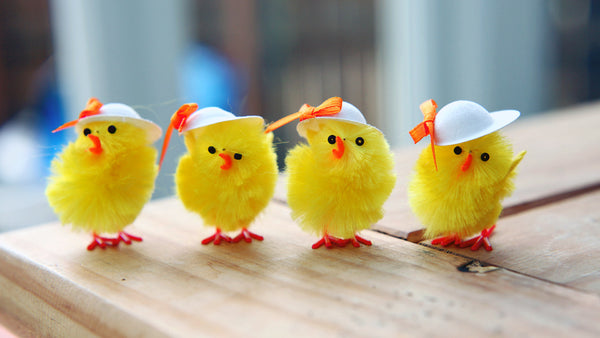 4 little yellow Easter chicks