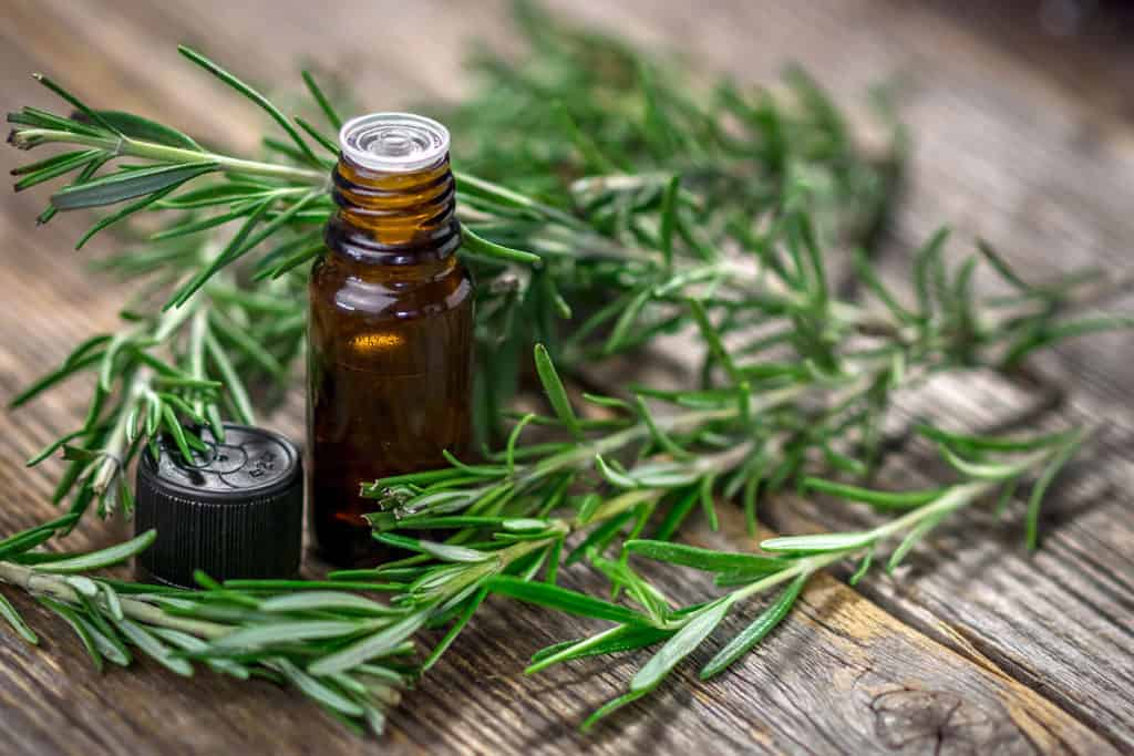 The Magic of Rosemary Essential Oil