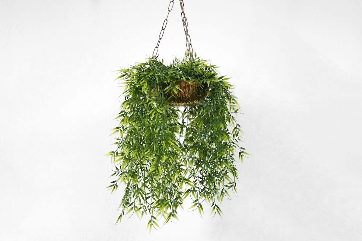 hanging plants at home