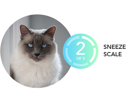Best and worst cat breeds for allergies | Cowaymega
