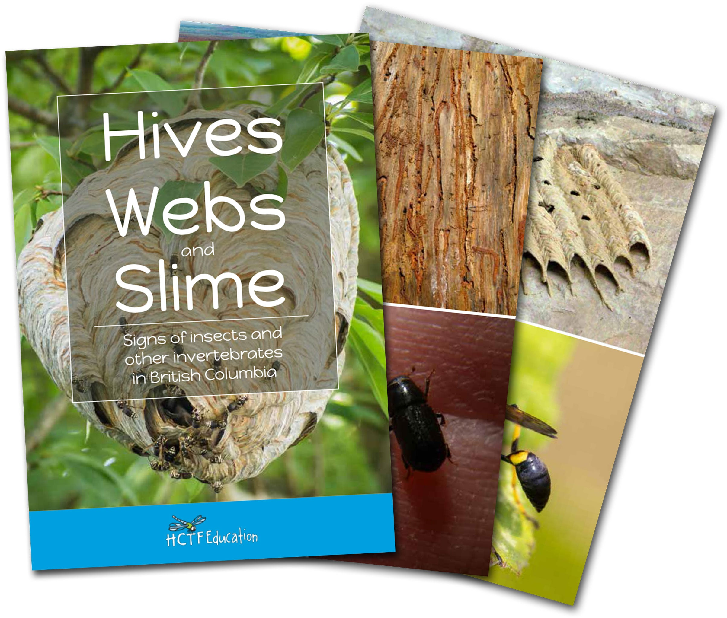 Hives, Webs, and Slime - Insect Signs Field Identification Cards