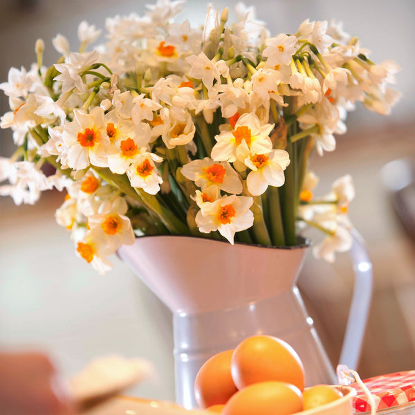 A jug of white and cream scented narcissi. The pure white is a variety called paper white and the other variety is daymark which has cream petals and a dark orange-red cup.