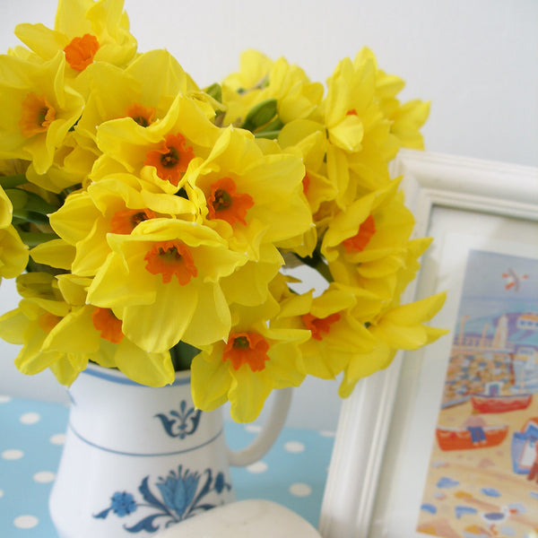 A small jug of vibrant yellow scented narcissi.  Variety Royal Connection.
