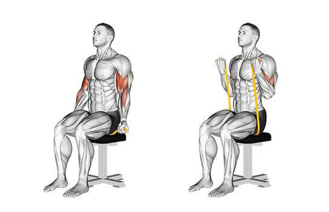 Resistance band seated biceps curl - Haryzona