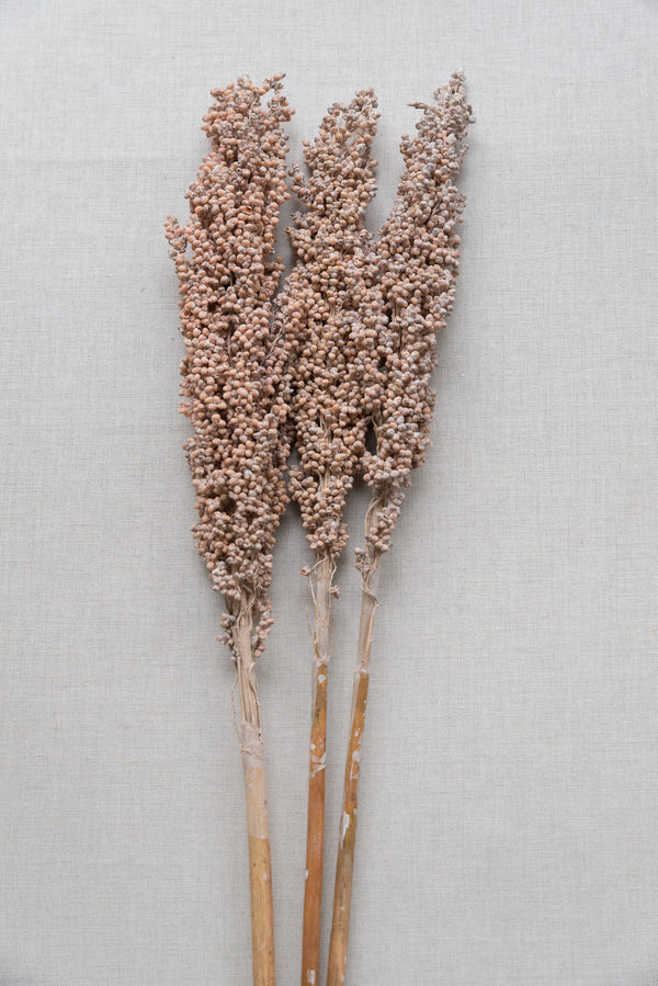 Indian Corn, soft pink