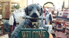 Cast Iron Door Stop - Labrador Dog with Welcome Sign Large Decorative Cute Cast Iron - Olde Church Emporium