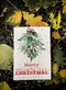 5 x Plantable Xmas Cards - Mistletoe