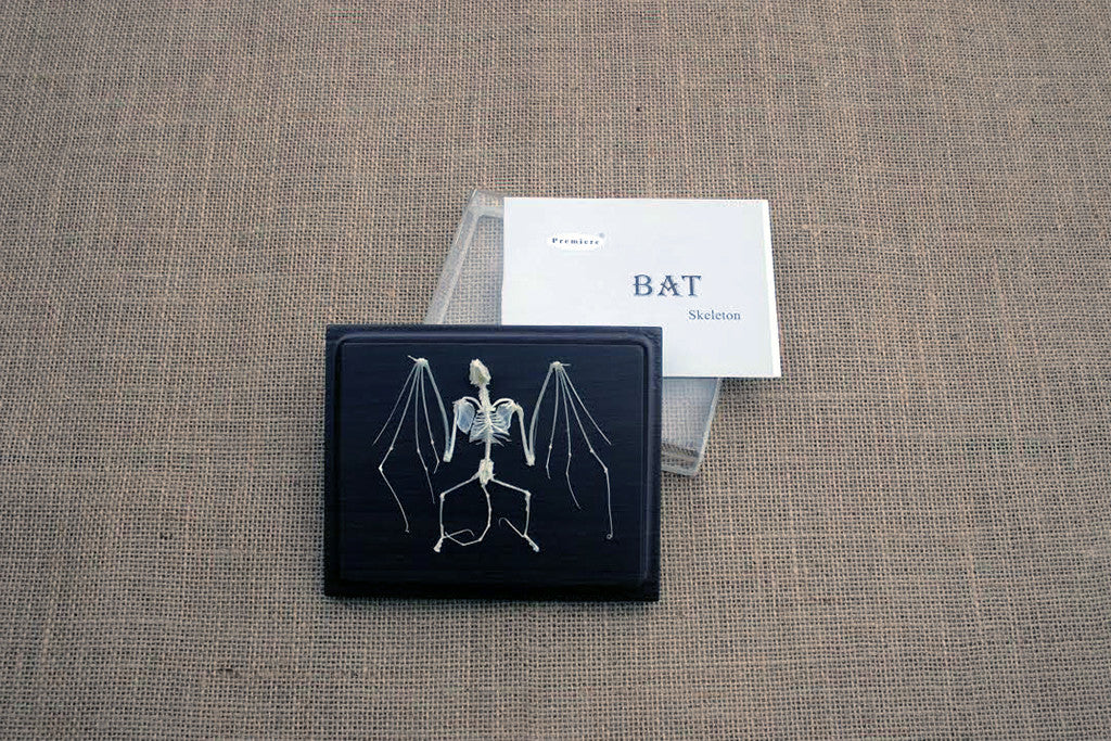 BSK - Real Bat Skeleton