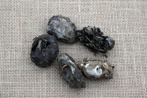 TOP - Owl Pellet with  Rabbit Remains
