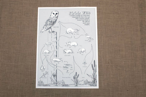 FWP - Owl Food Web Poster