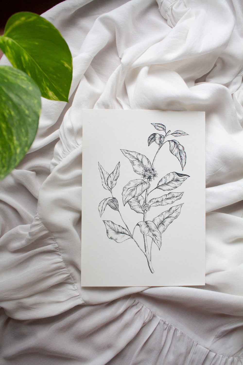Coffee Plant Botanical A5 Print