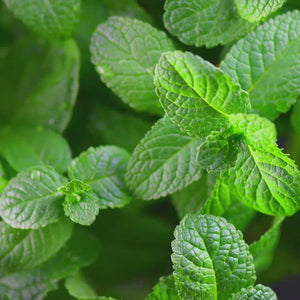 Mint Mojito Warming Intimate Massage Oil