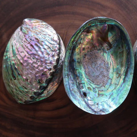 Abalone Shell Polished