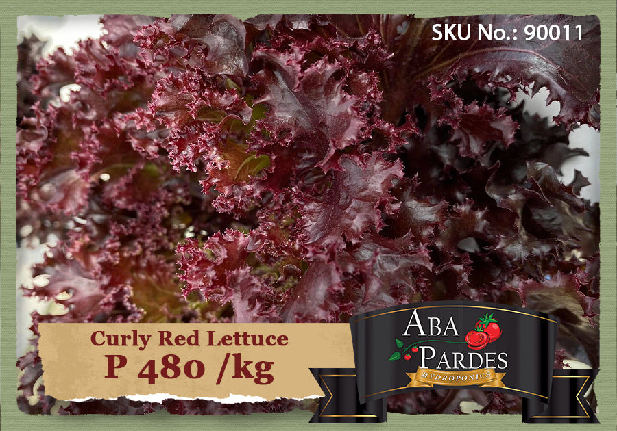 ABA PARDES LETTUCE Curly Red Lettuce 1kg