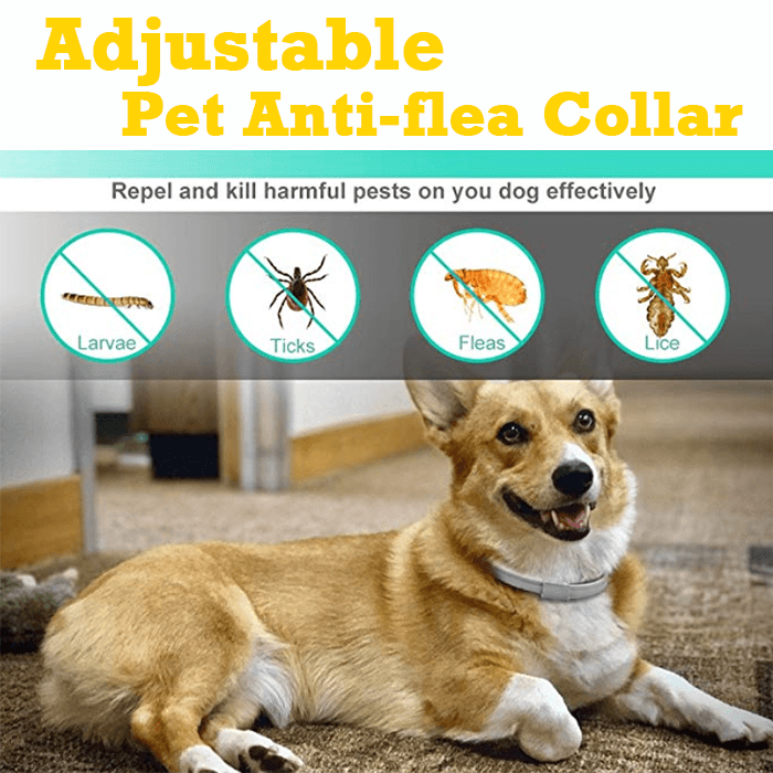 Adjustable Pet Anti-flea Collar