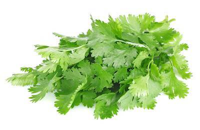 Cilantro Bunches