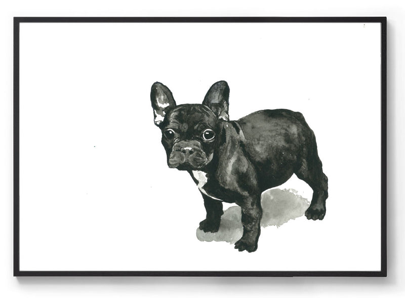 Frankie the Frenchie