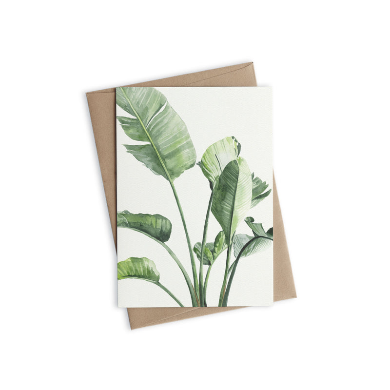 Greeting Card - Strelitzia