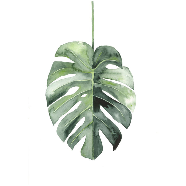 Single Monstera