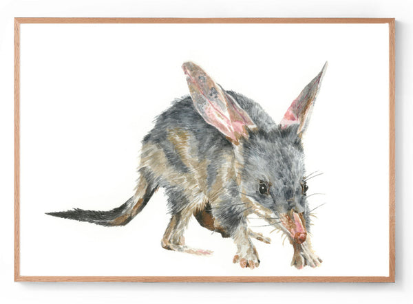 The Bilby