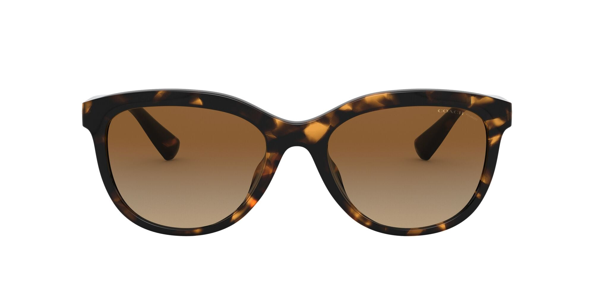 DARK TORTOISE | POLARIZED