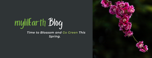 Sustainable Spring Cleaning: Reducing Our Crimes against the Environment