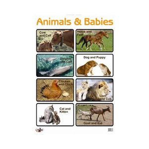 Poster - Wallchart - Animals and babies