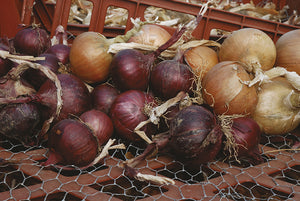 Four Thieves' Vinegar and an Onion Poultice