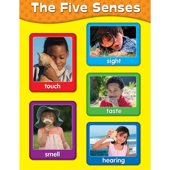 Chartlets The Five Senses - Supplies by Teachers