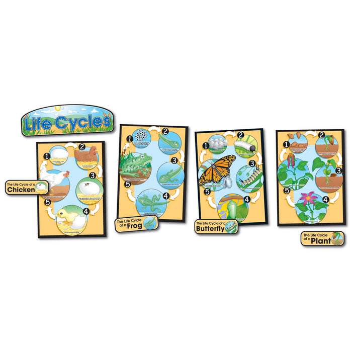 Bb Set Life Cycles Gr 1-8 Butterfly Chick/Frog/Plant