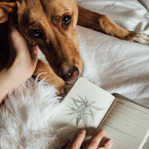 Goldleaf Journal Pet CBD Jotter Lifestyle