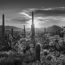 Load image into Gallery viewer, Cholla Sunset