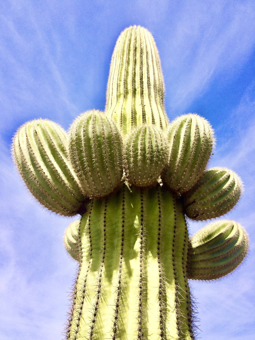 Photo 11x14 Happy Saguaro