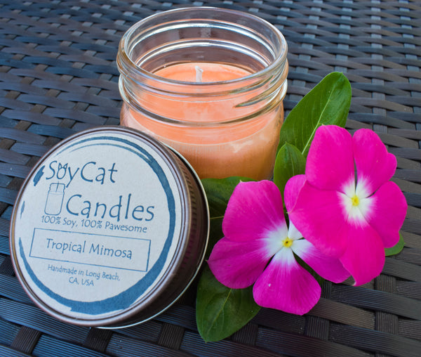Tropical Mimosa Kitten Size Candle (4oz)