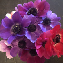 Load image into Gallery viewer, LOCAL ONLY: Anemones
