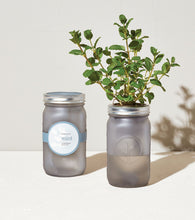 Load image into Gallery viewer, Garden Jars - Herbs - Basil, Chamomile or Mint