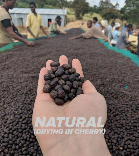 More than a hype: natural processed coffees.