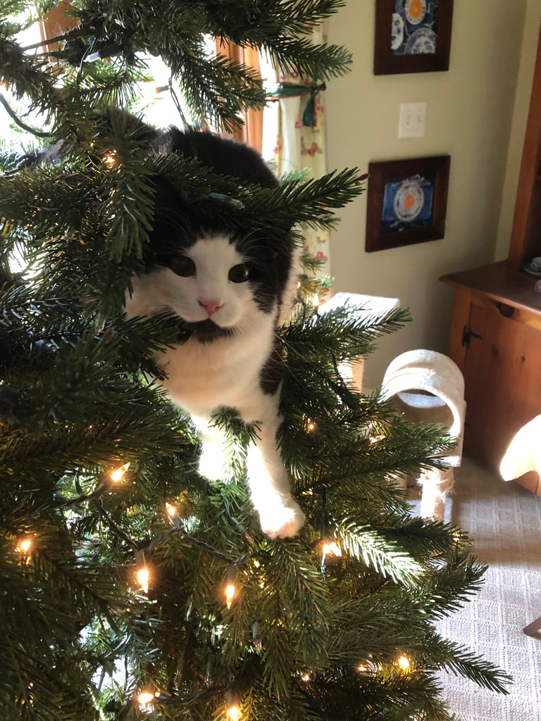 Cat-astrophes at Christmas