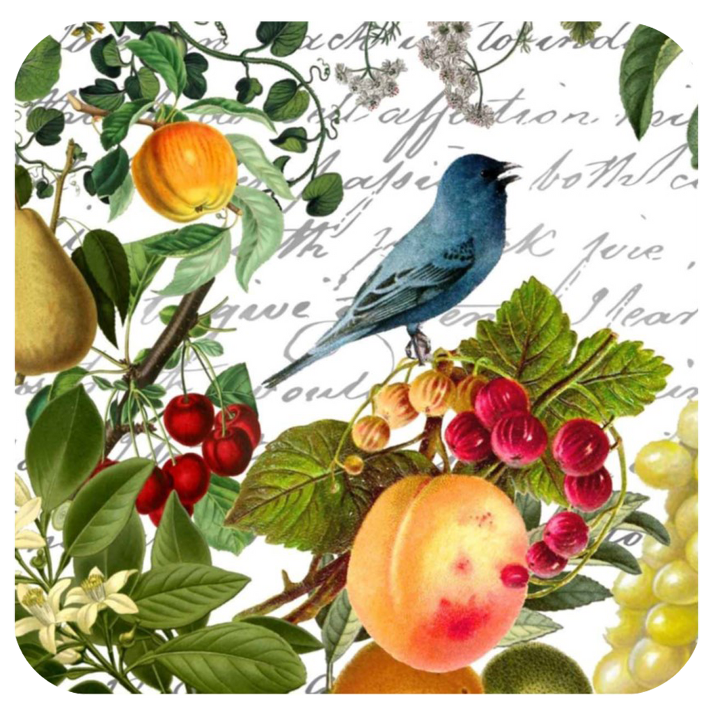 Blue Bird & Fruit Coaster S/6 - Golden Hill Studio