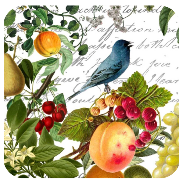 Blue Bird & Fruit Coaster S/6