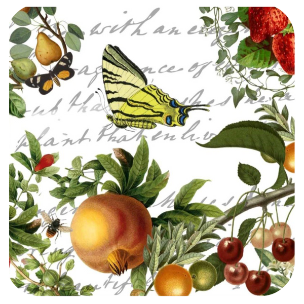 Butterfly & Fruit Coaster S/6 - Golden Hill Studio