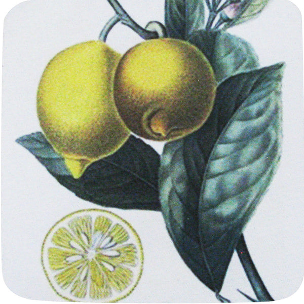 Lemon Slice Coaster S/4 - Golden Hill Studio