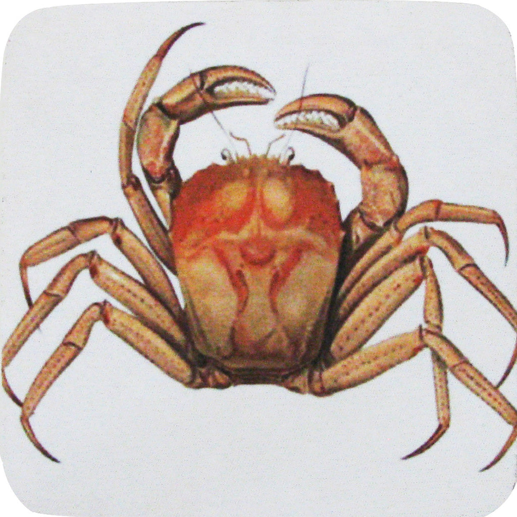 Mud Crab Coaster S/4 - Golden Hill Studio