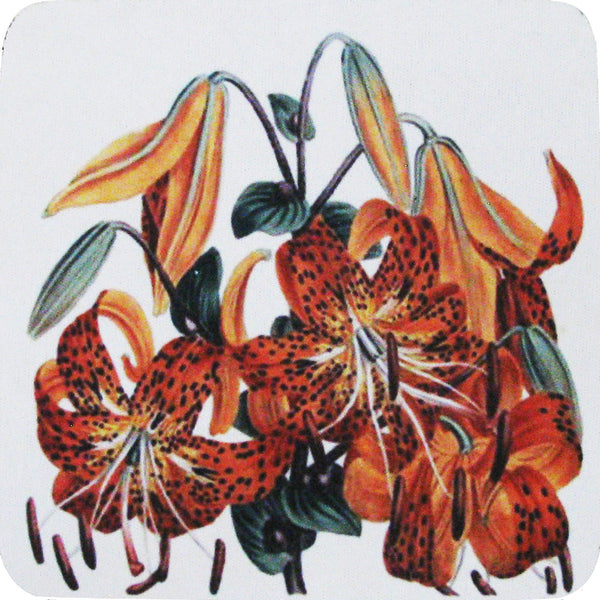 Tiger Lily Coaster S/4 - Golden Hill Studio