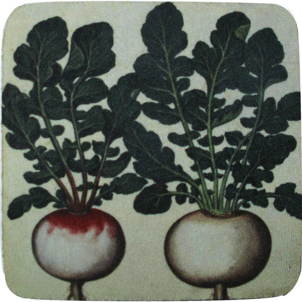 Radishes Coaster S/4 - Golden Hill Studio