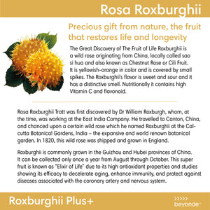 Roxburghii Plus Botanical Beverage Mix (Carton of 6 Bottles)