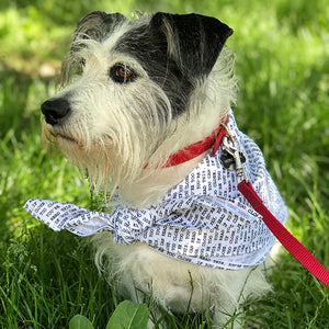 "Dog wearing ""too close"" pattern bandana"