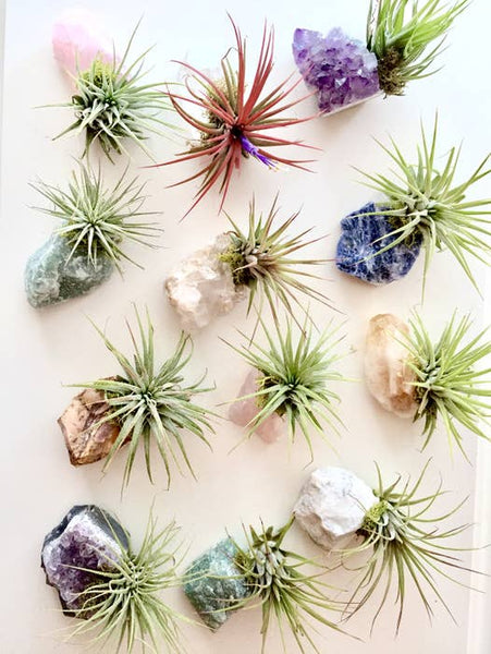 Crystal Air Plants l Zen Garden l Crystal + Plant