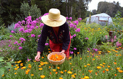 woman wearing a floppy hat harvesting flowers into a basket.